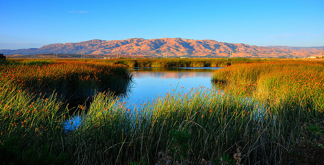 Sunset over the Don Edwards Wildlife Refuge. Image by Britta Heise