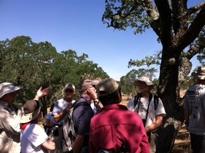 Local botanic expert Bert Johnson helped us distinguish between a coast live Oak, a blue oak, and oracle oaks.
