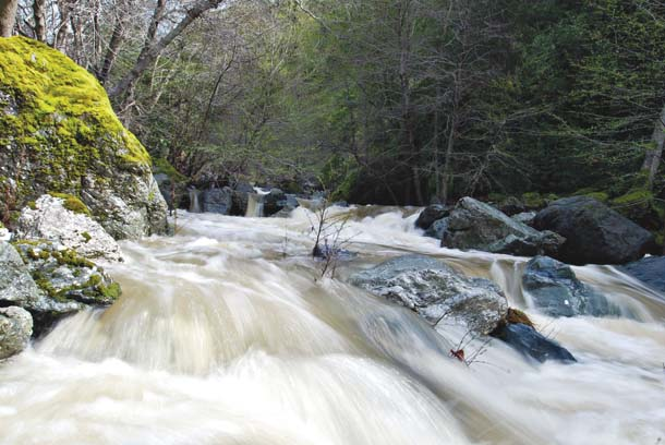 Alameda Creek in flood near Little Yosemite in Sunol Regional Wilderness. The largest stream in the East Bay, Alameda Creek provides habitat for many native fish. Photo by Wayne Kodamav