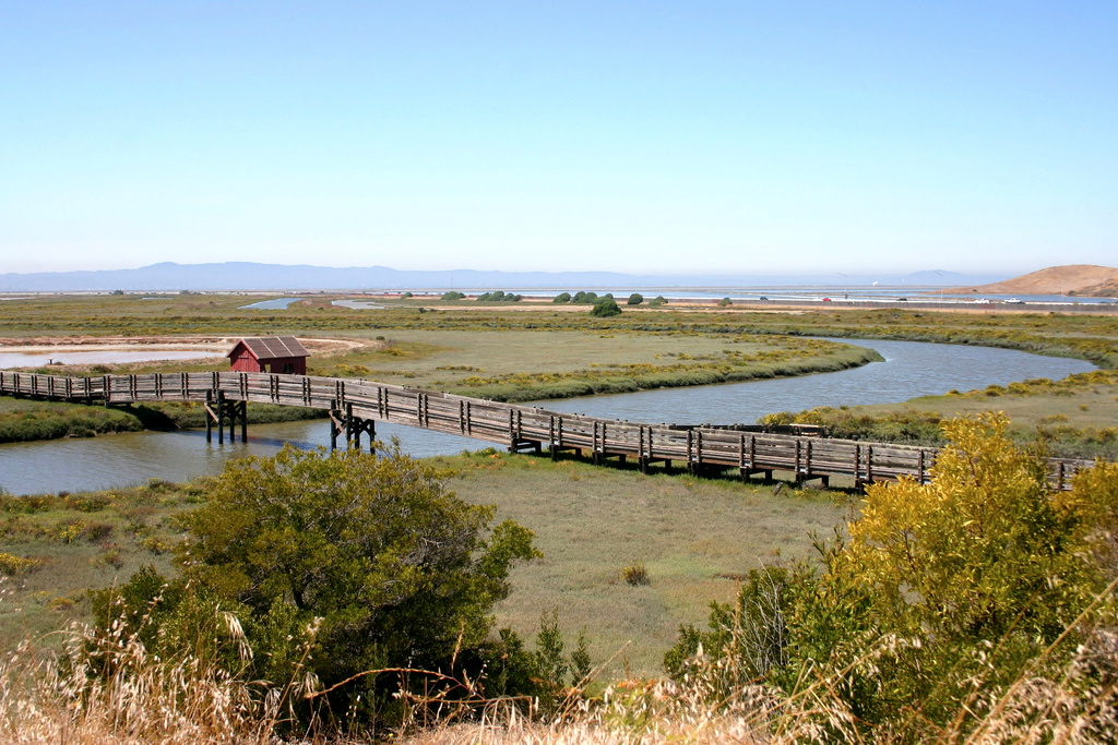 Don Edwards National Wildlife Refuge and its many research projects have closed because of the shutdown. Photo: dotpolka.