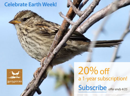 Earth Week Special: 20% off a one-year subscription to Bay Nature magazine