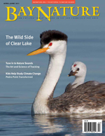 April-June 2013 cover of Bay Nature magazine