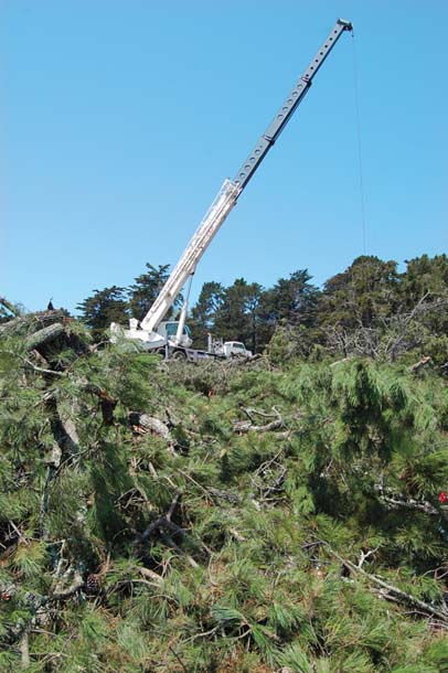 removing trees with crane