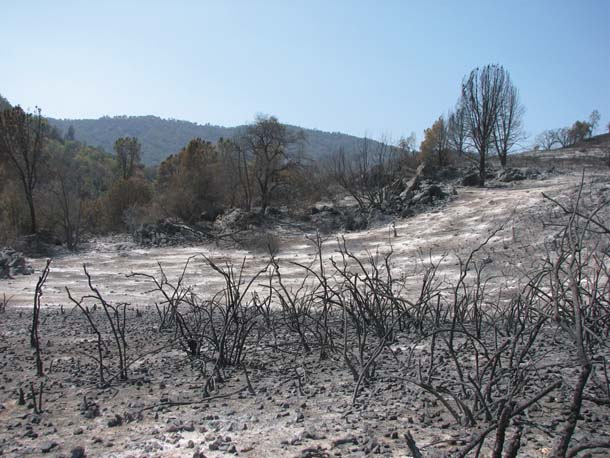 Henry Coe Park, after fire