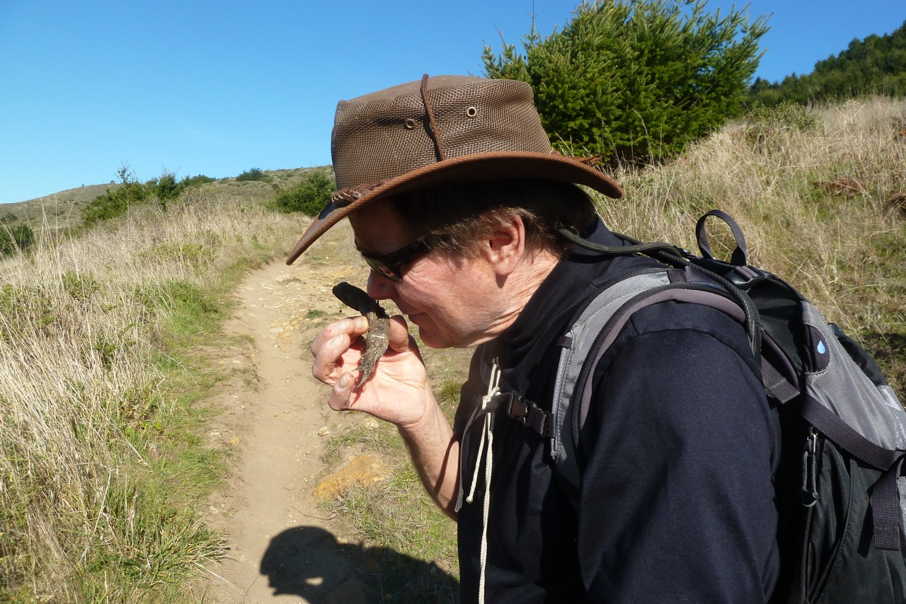 Hiker examines coyote scat