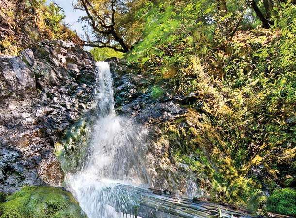 This waterfall was to be the centerpiece of a proposed public park in the 1990s. Now it has been protected within the new Bohemia Ecological Preserve, a partnership between local nonprofits and landowners. Photo by Stephen Joseph.