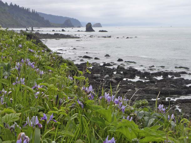 Once on the closure list, Del Norte Coast Redwoods on the North Coast and other budget-crunched California state parks have been the focus of bipartisan legislative action in Sacramento recently.  Photo by Joan Hamilton