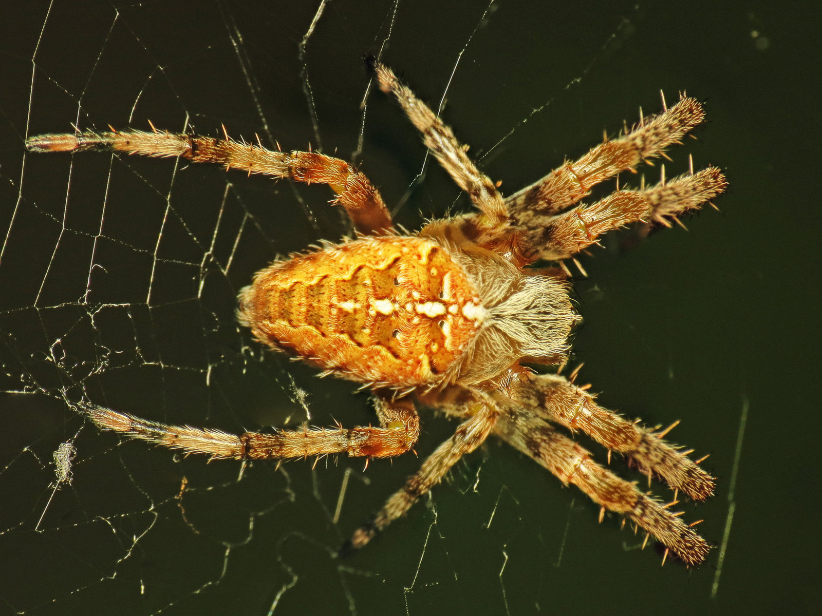 I wonder what big black spiders dream about
