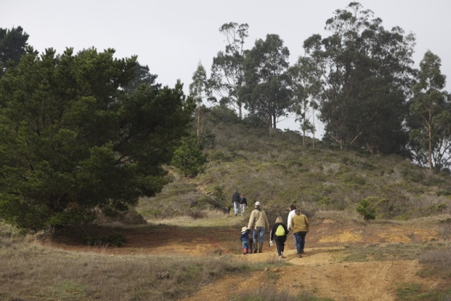 Visitors hike to one of the Monterey pine groves selected for thinning. Photo by Alison Hawkes.