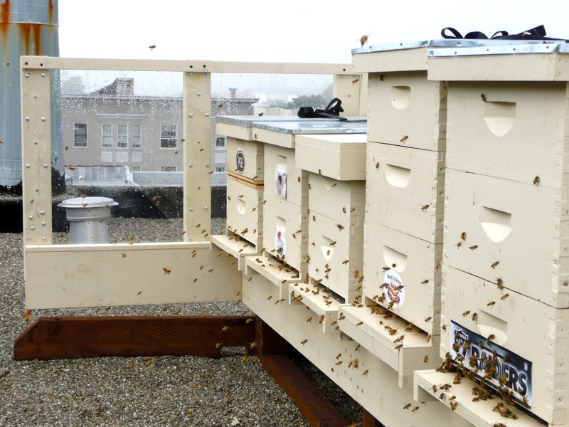 Charlie Blevin's rooftop hives. A plexi-glass screen shields bees from the wind allowing for easy entrance into their hives. Photo by Charlie Blevins.