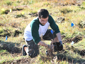 Alec Howard places seedlings near the flags for planting. Photo: Paul Epstein.