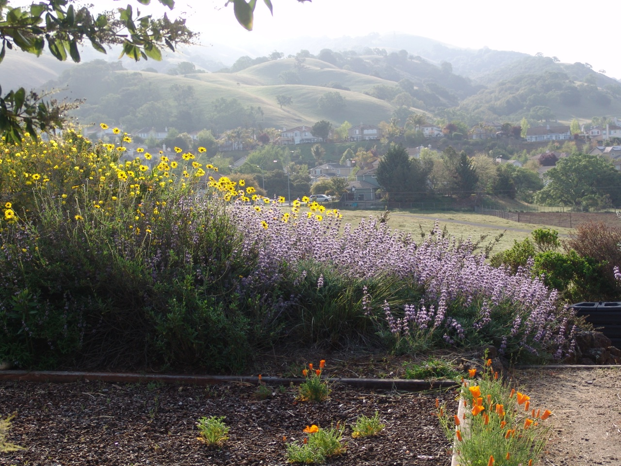 Creating A Drought Resilient Garden With California Natives