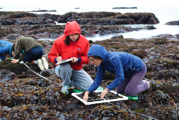 Branson School students check a quadrat as part of a coastal monitoring program at Duxbury Reef. (Photo by Sabine Bergmann)