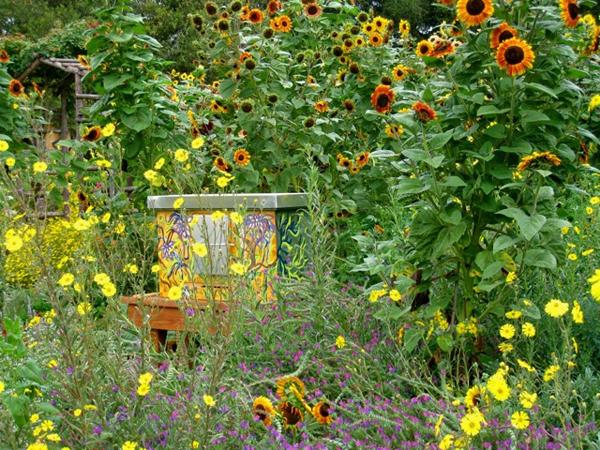 Tarweeds and sunflowers for pollinators at The Melissa Garden in Healdsburg