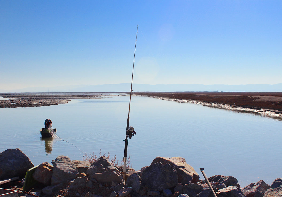 in the south bay salt ponds, better science through fishing - bay, Fishing Rod