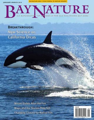 Bay Nature Jan-Mar 2014 cover
