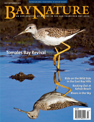 BayNaturev15n3_FINAL_COVER