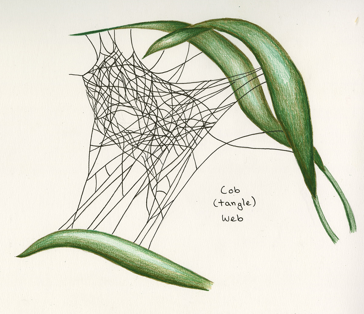 cob-tangle web