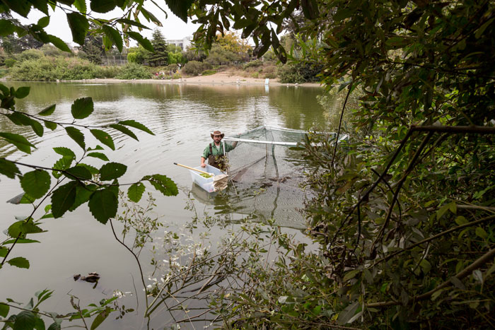 Sonoma State graduate student Dana Terry prepares to release caged turtles into Mountain Lake. (Photo by Charity Vargas Photography, courtesy Presidio Trust)