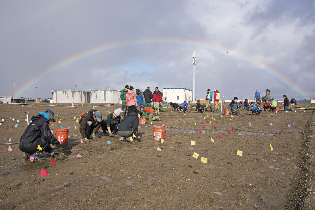 """A rainbow frames Save the Bay's volunteers as they plant natives (raised on-site) in the gentle slope of the experimental """"horizontal levee"""" at the Oro Loma wastewater treatment facility in San Lorenzo. (Photo by Andrea Laue, sparebeauty.com)"""