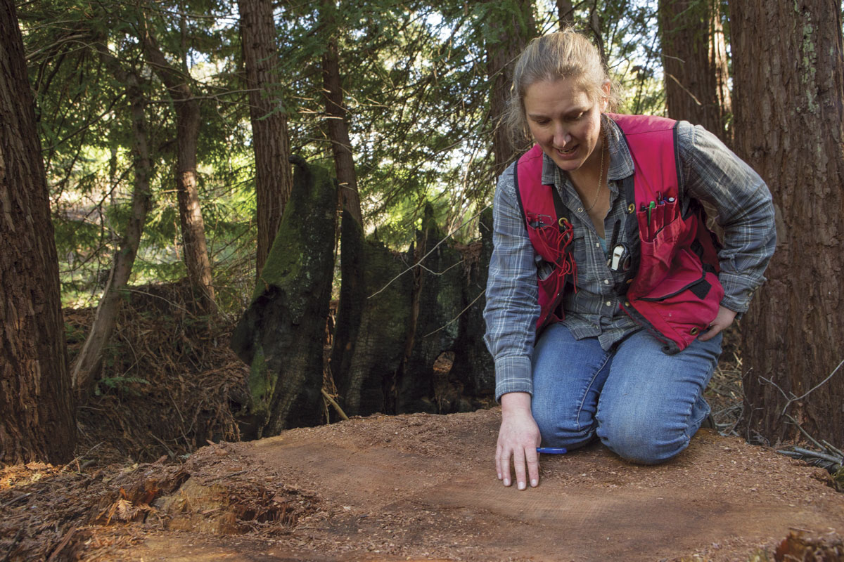 "Nadia Hamey kneels on a redwood stump in the ""working forest"" section of San Vicente Redwoods. The tree was recently cut as part of program of low-intensity logging to support the long-term restoration of the forest.  (Photo by Sebastian Kennerknecht, pumapix.com)"