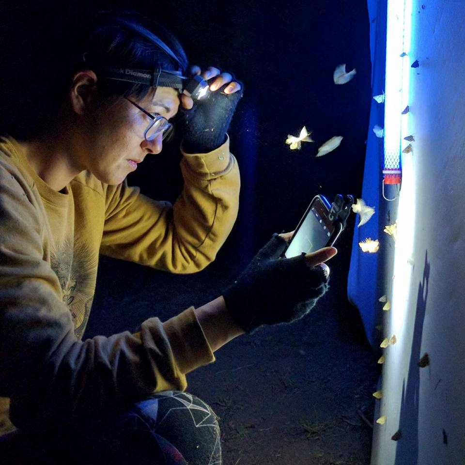 CCNH Naturalist Constance Taylor works a moth light. (Photo by Ken-ichi Ueda)